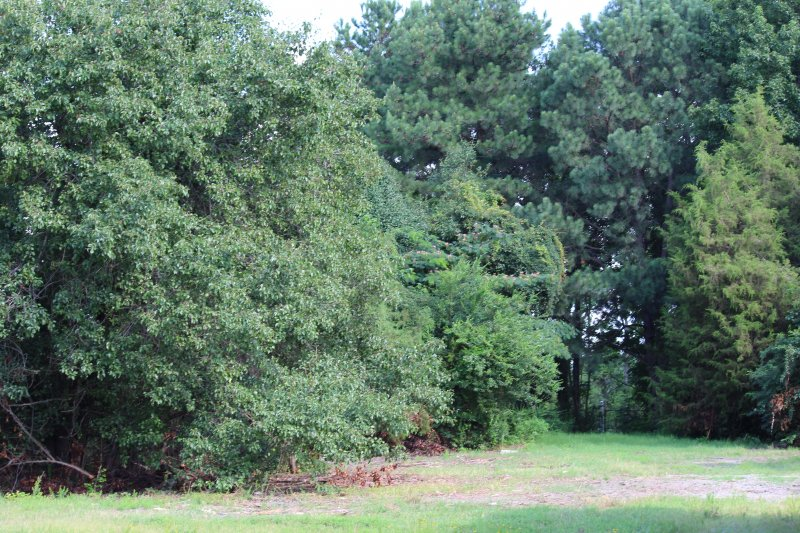 Advance-tree-care-of-virginia-beach-VA-lot-clearing-pic-3741