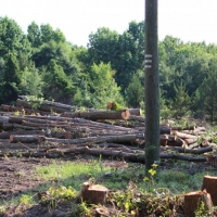Advance-tree-care-of-virginia-beach-VA-lot-clearing-pic-3627