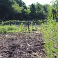 Advance-tree-care-of-virginia-beach-VA-lot-clearing-pic-3635