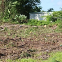 Advance-tree-care-of-virginia-beach-VA-lot-clearing-pic-3638