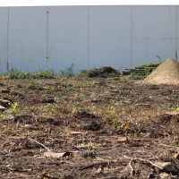 Advance-tree-care-of-virginia-beach-VA-lot-clearing-pic-3642