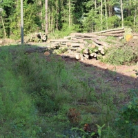 Advance-tree-care-of-virginia-beach-VA-lot-clearing-pic-3645