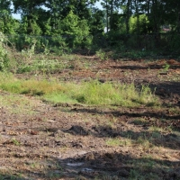 Advance-tree-care-of-virginia-beach-VA-lot-clearing-pic-3654