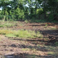 Advance-tree-care-of-virginia-beach-VA-lot-clearing-pic-3657