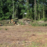 Advance-tree-care-of-virginia-beach-VA-lot-clearing-pic-3665