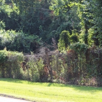 Advance-tree-care-of-virginia-beach-VA-lot-clearing-pic-3697