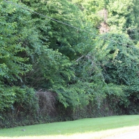 Advance-tree-care-of-virginia-beach-VA-lot-clearing-pic-3701