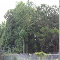 Advance-tree-care-of-virginia-beach-VA-lot-clearing-pic-3709