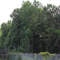 Advance-tree-care-of-virginia-beach-VA-lot-clearing-pic-3710