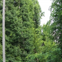 Advance-tree-care-of-virginia-beach-VA-lot-clearing-pic-3730