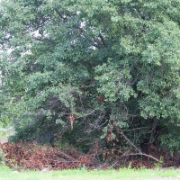 Advance-tree-care-of-virginia-beach-VA-lot-clearing-pic-3734