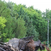 Advance-tree-care-of-virginia-beach-VA-lot-clearing-pic-3739