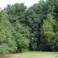 Advance-tree-care-of-virginia-beach-VA-lot-clearing-pic-3742