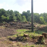 Advance-tree-care-of-virginia-beach-VA-lot-clearing-pic-3744