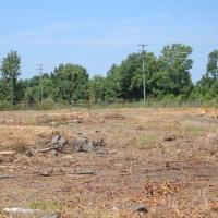 Advance-tree-care-of-virginia-beach-VA-lot-clearing-pic-4196