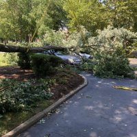 advance-tree-care-in-virginia-beach-virginia-storm-tree-removal-with-crane-pic1