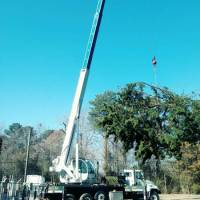advance-tree-care-in-virginia-beach-virginia-storm-tree-removal-with-crane-pic10