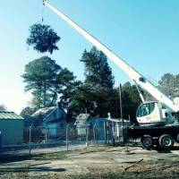 advance-tree-care-in-virginia-beach-virginia-storm-tree-removal-with-crane-pic11