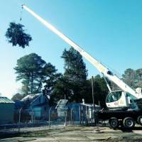 advance-tree-care-in-virginia-beach-virginia-storm-tree-removal-with-crane-pic8