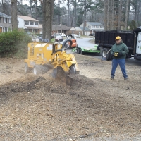 stump-grinding-pictures-169