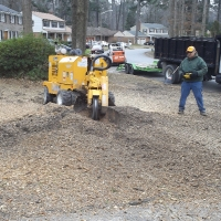 stump-grinding-pictures-171