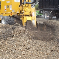 stump-grinding-pictures-173