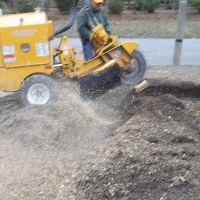 stump-grinding-pictures-174