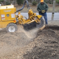 stump-grinding-pictures-175