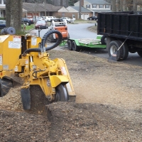 stump-grinding-pictures-176