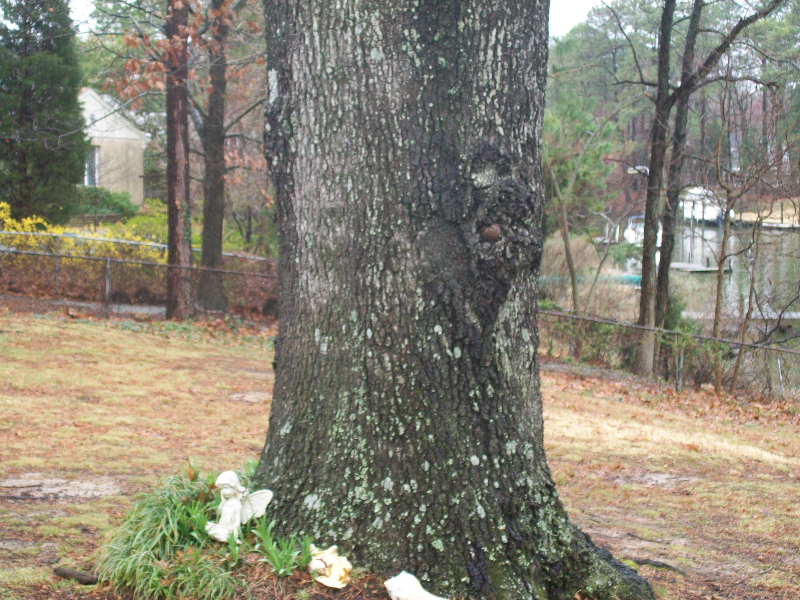 Virginia Beach Tree Removal Picture 16