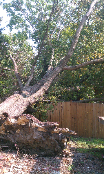 Virginia Beach Tree Removal Picture 20