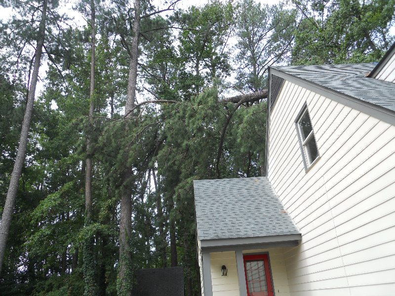 Virginia Beach Tree Removal Picture 22