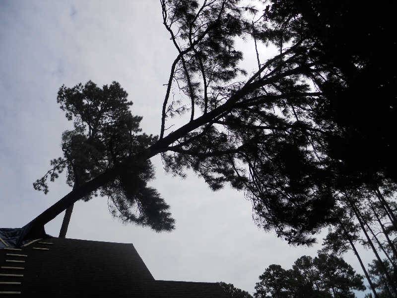 Virginia Beach Tree Removal Picture 24