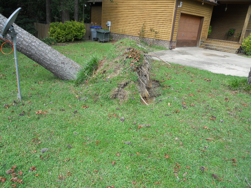 Virginia Beach Tree Removal Picture 28