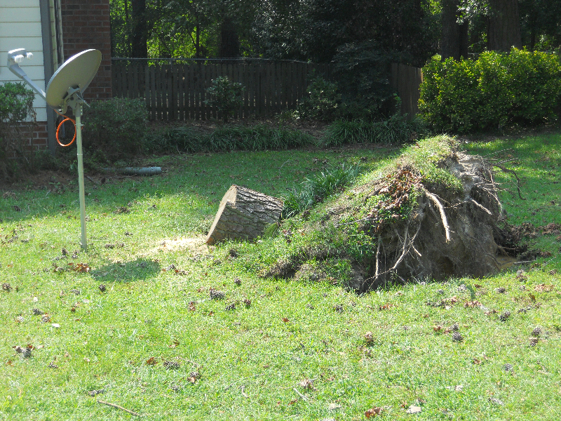 Virginia Beach Tree Removal Picture 29