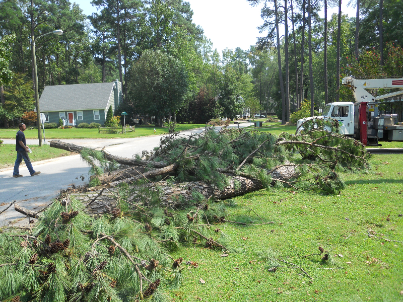 Virginia Beach Tree Removal Picture 30
