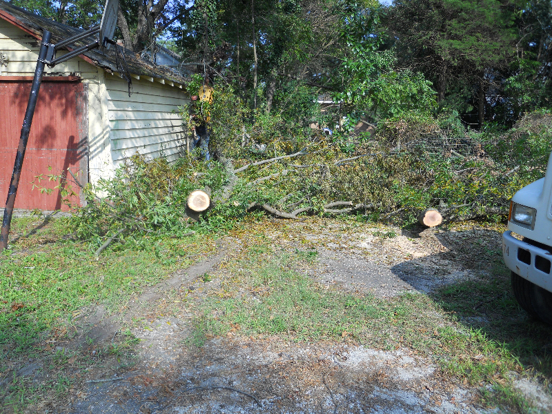 Virginia Beach Tree Removal Picture 32