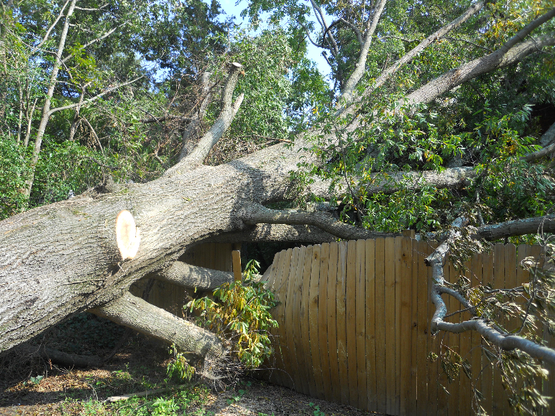 Virginia Beach Tree Removal Picture 34