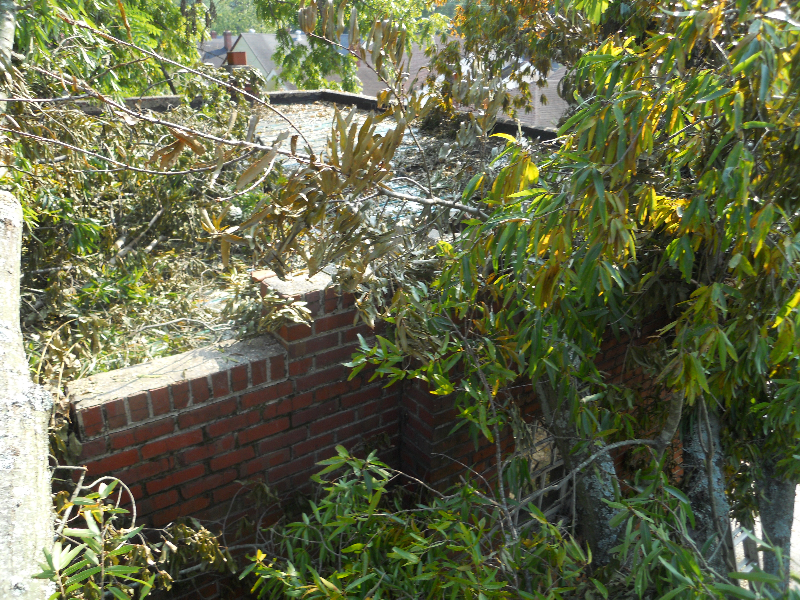 Virginia Beach Tree Removal Picture 39