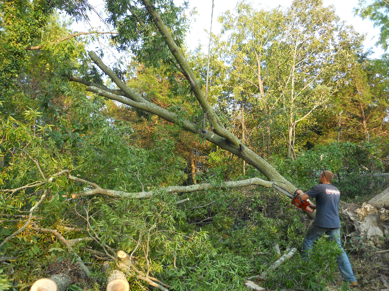 Virginia Beach Tree Removal Picture 11