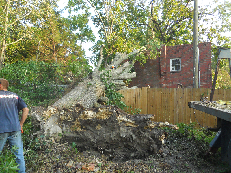 Virginia Beach Tree Removal Picture 15