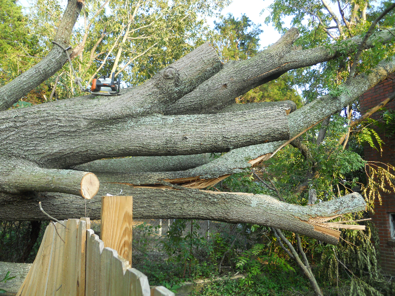 Virginia Beach Tree Removal Picture 42