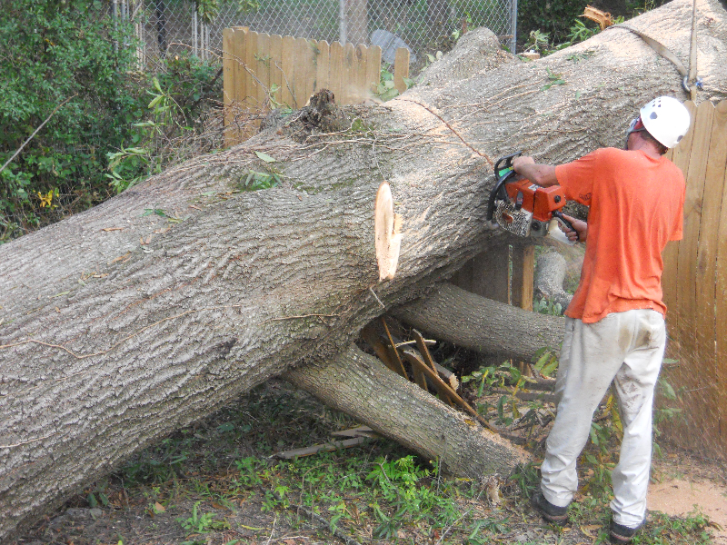 Virginia Beach Tree Removal Picture 44