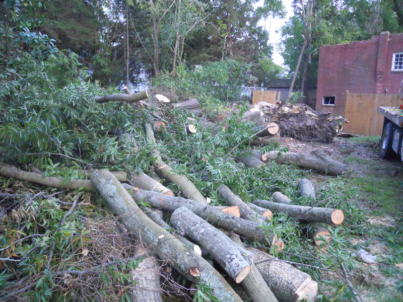 Virginia Beach Tree Removal Picture 52