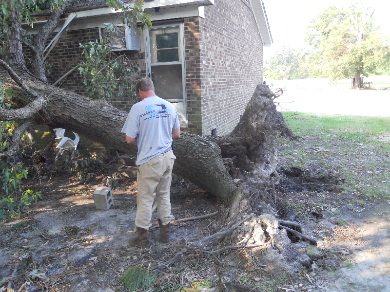 Virginia Beach Tree Removal Picture 55
