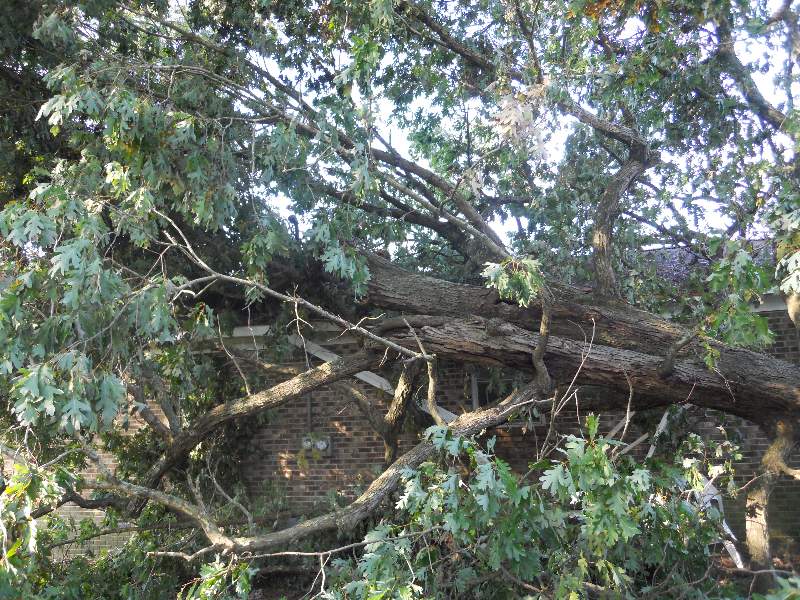 Virginia Beach Tree Removal Picture 56