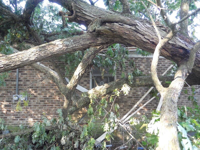 Virginia Beach Tree Removal Picture 62