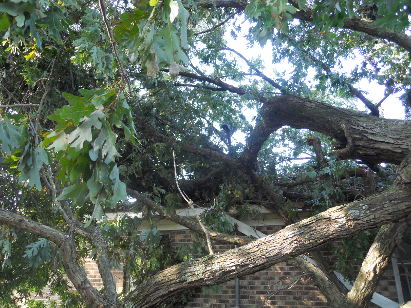 Virginia Beach Tree Removal Picture 63