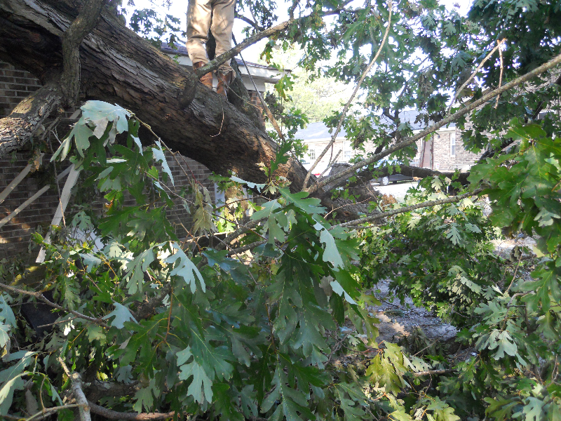 Virginia Beach Tree Removal Picture 64