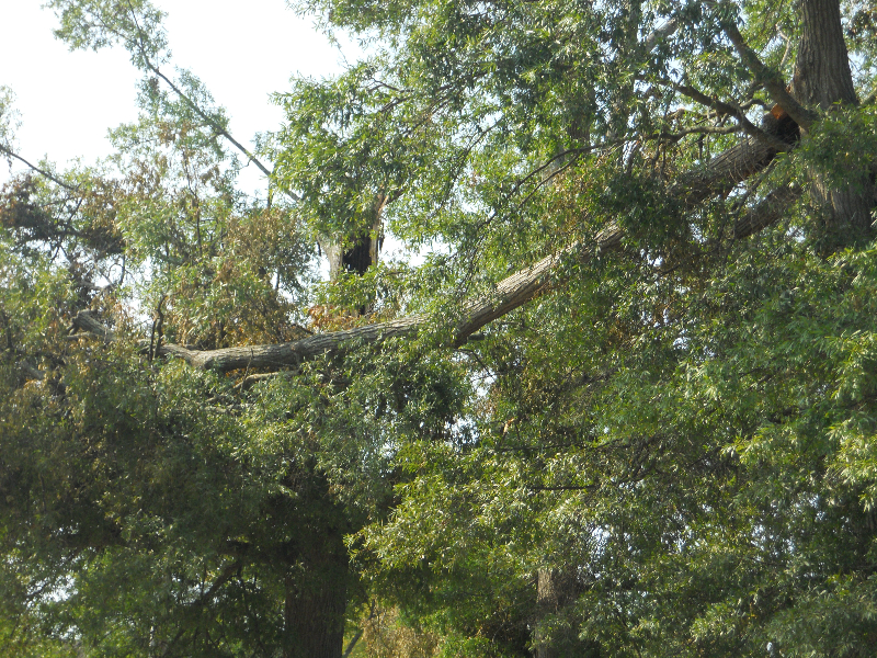 Virginia Beach Tree Removal Picture 59